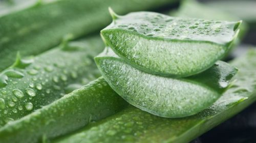 Healthy Behow to remove pimples with aloe vera gel nefits of Aloe Vera