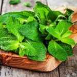 Best Peppermint Oil In India